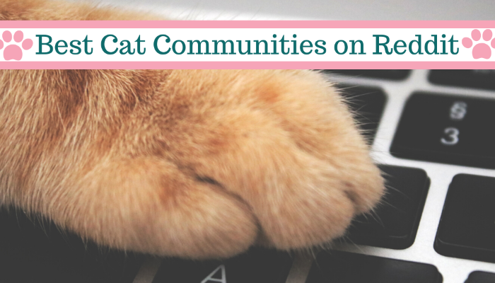 Best Reddit Communities for Cat Lovers