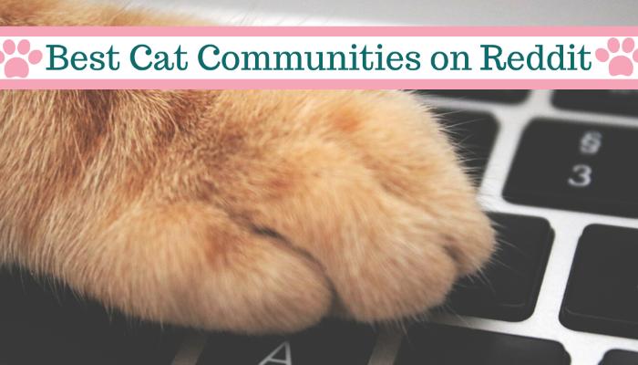 Best Reddit Communities for Cat Lovers