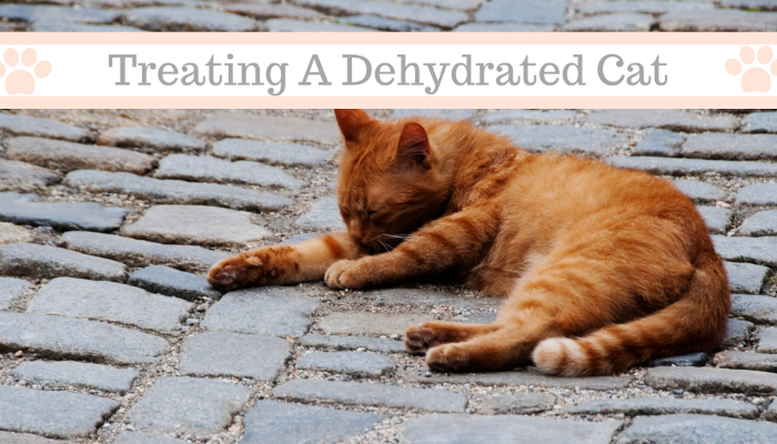 Treating a Dehydrated Cat