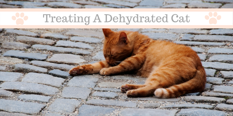 what should i do if my cat is dehydrated?