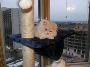 does my cat need a cat tree?