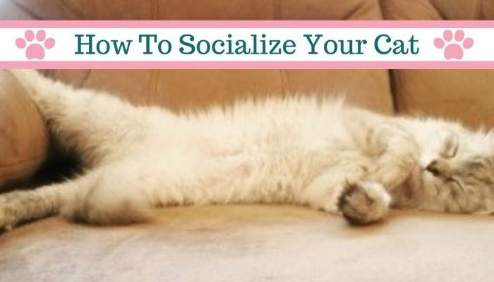 How to Socialize a Cat