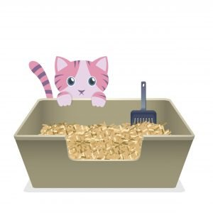 what type of litter box is best?