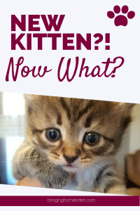 new kitten guide
