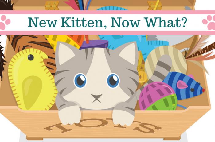 I Just Got a Kitten – Now What?